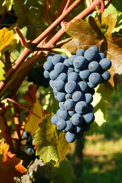 vin rouge d'alsace