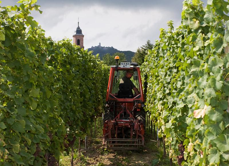 Vignoble Bléger en Alsace